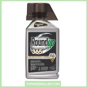 Roundup Max Control 365 Concentrate (Weed Killer Plus Weed Preventer)