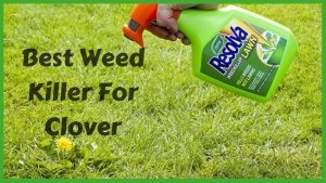 Best Weed Killer For Clover