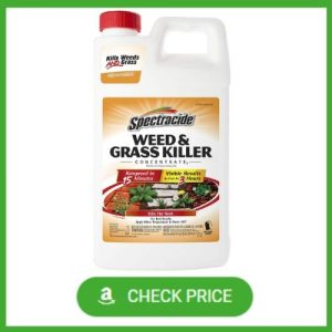 best weed killer for clover food plots