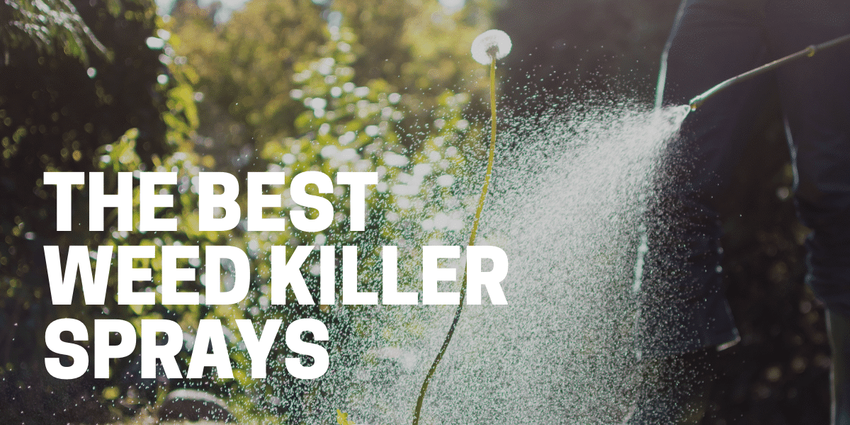 best weed killer spray to kill weeds fast