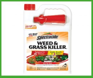 best Weed Killer for Southern Lawns