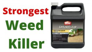 The strongest weed killer works quickly and effectively