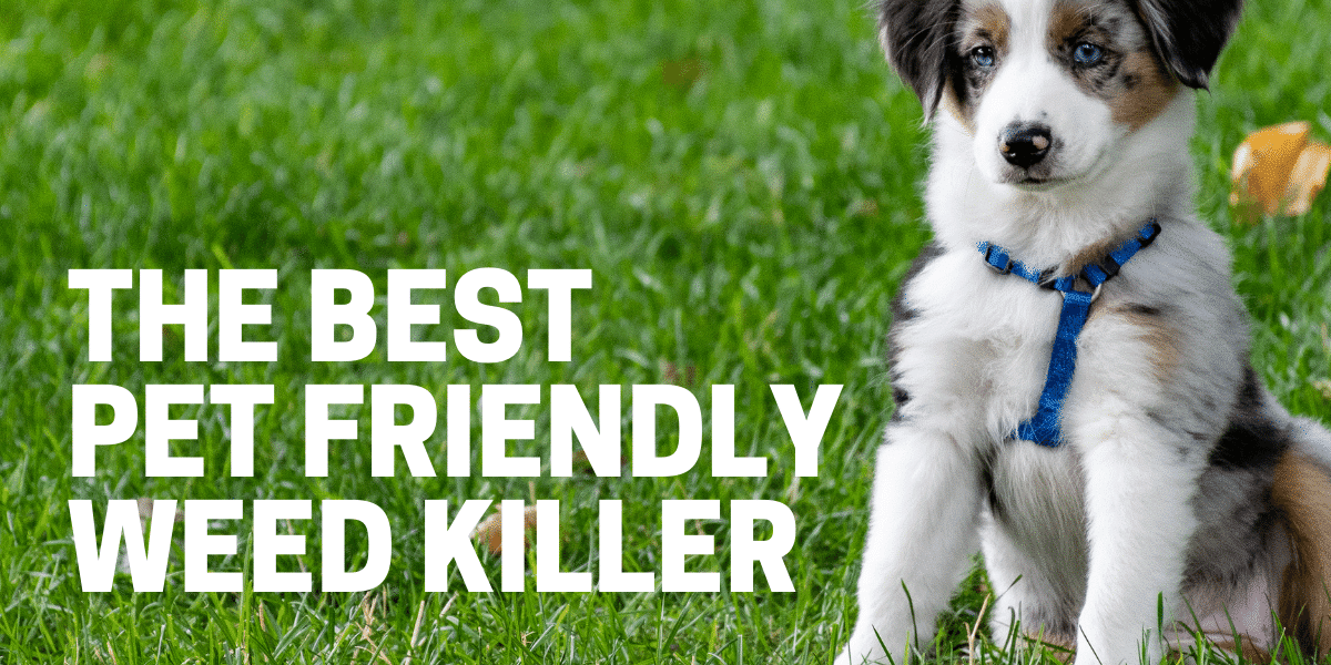 Best Pet Friendly Weed Killer for 2021
