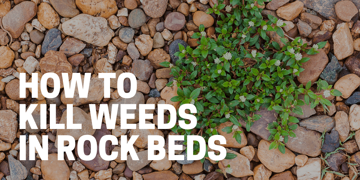 how to kill weeds in rocks for nice rock beds