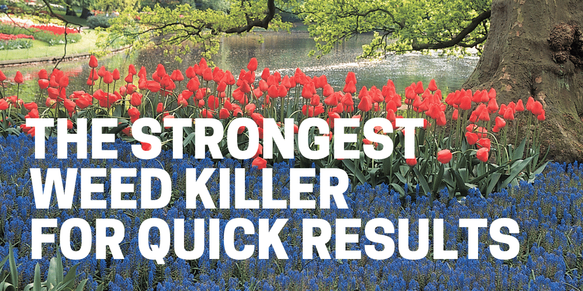 strongest weed killer herbicide for quick and effective results