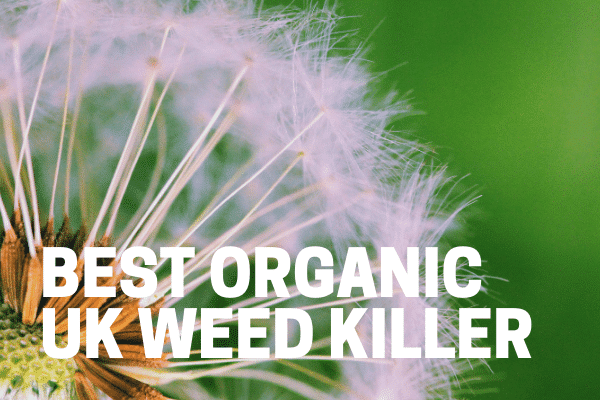 best organic uk weed killer