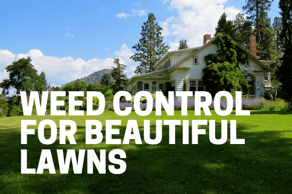 best weed killers herbicides for lawn