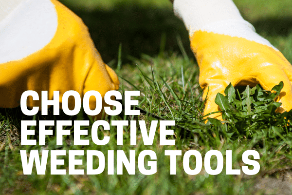 best weed killer application and tools