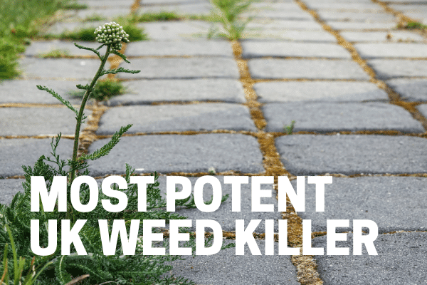 most potent uk weed killer for driveways lawn