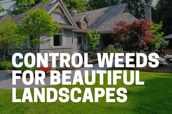 strongest weed killers control weeds in front of house