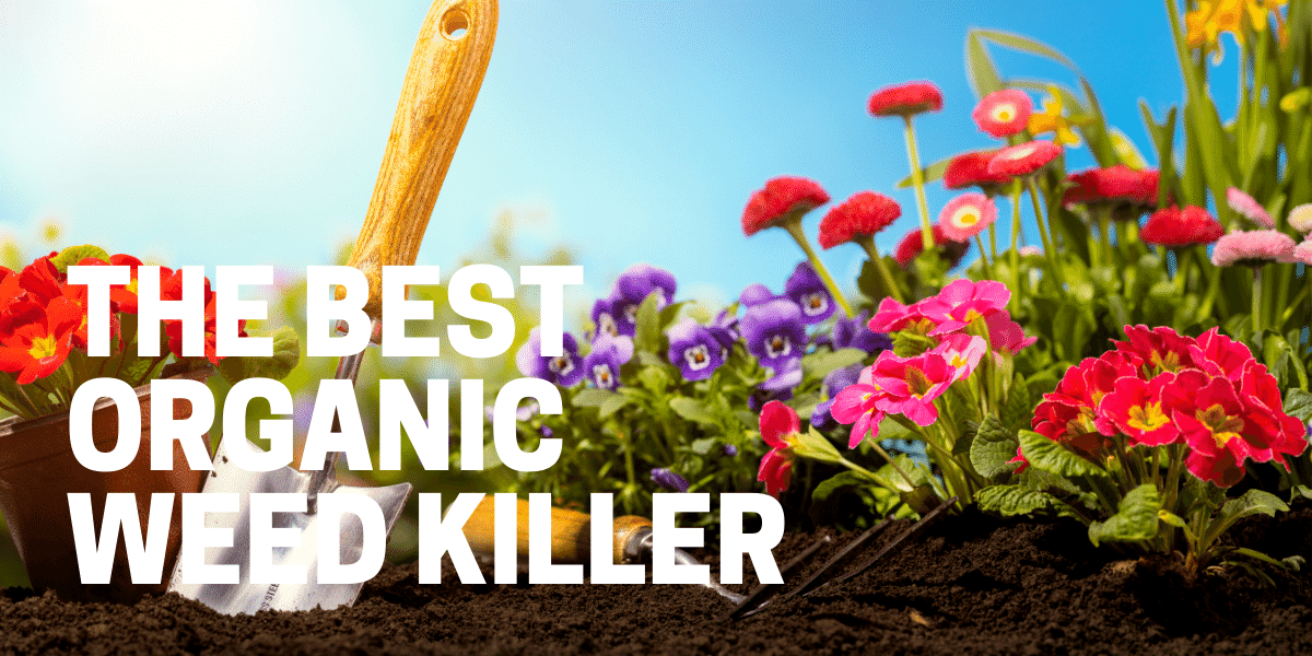 best natural organic weed killer used by a gardener