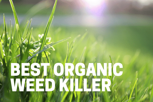 best organic and natural weed killer at home depot