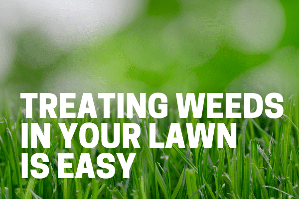 best way to kill weed in lawn used by professionals