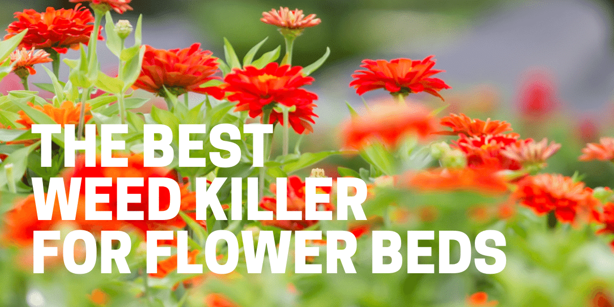 best weed killer by roundup ortho spectracide for flower beds used by gardener