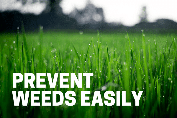 best weed killer for lawns prevents weeds