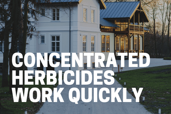 concentrated weed killer being used on asphalt driveway