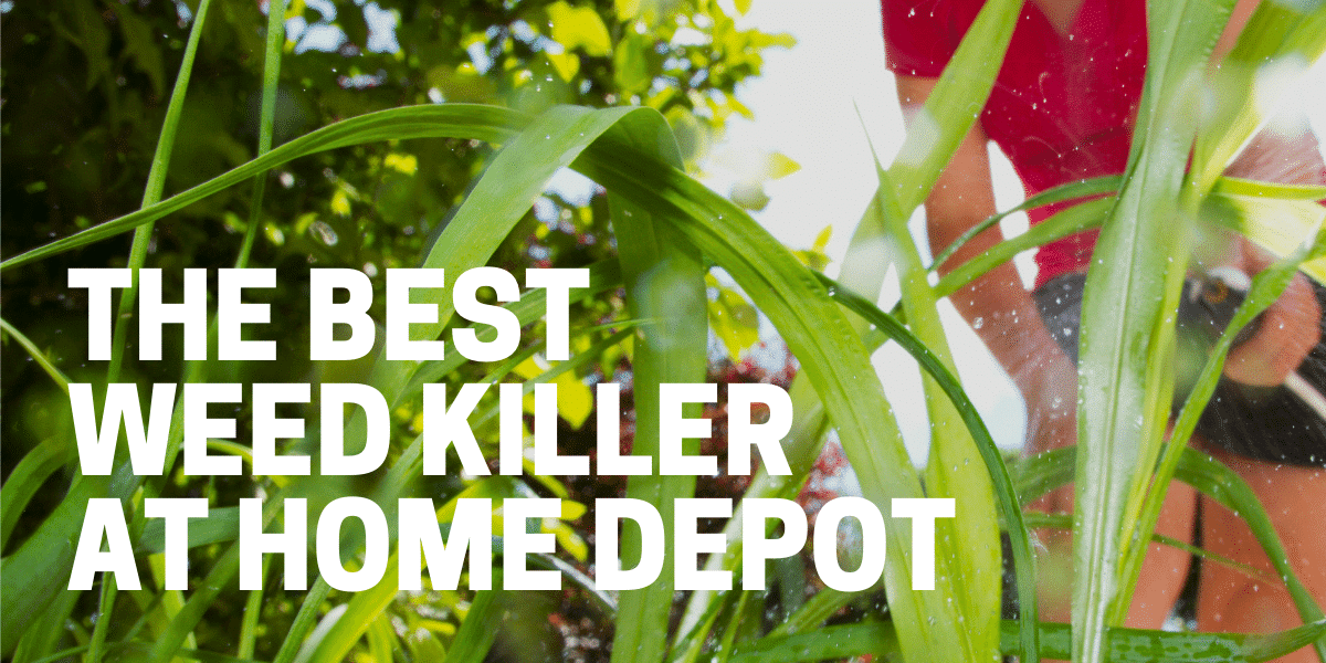gardener using best weed killer at home depot on lawn and garden