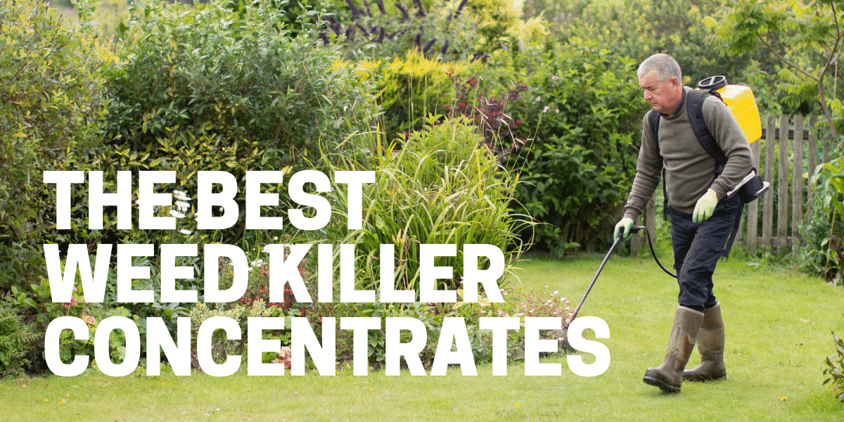 gardener using best weed killer concentrate to kill weeds