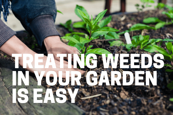 gardener using best weed killer for gardens