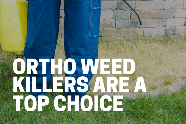 gardener using ortho weed killer concentrate