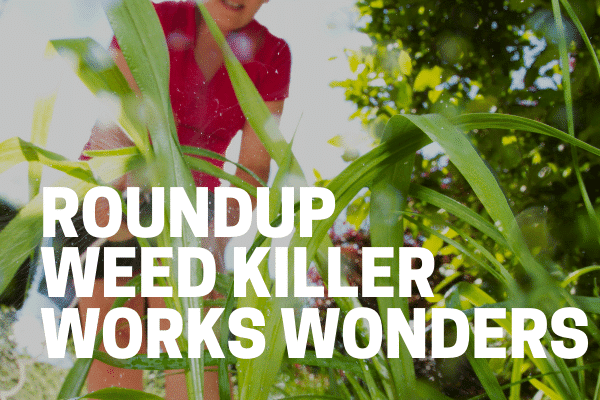 gardener using roundup weed killer concentrate