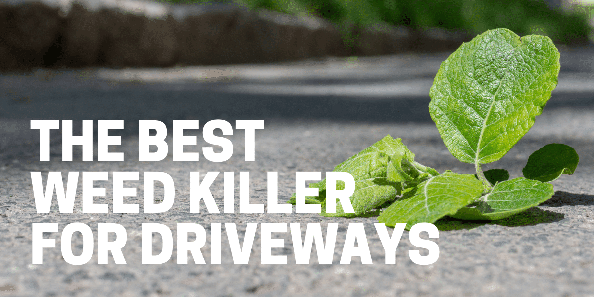homeowner using best weed killer for driveways