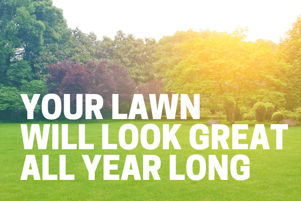 kill weed in lawn for year round health