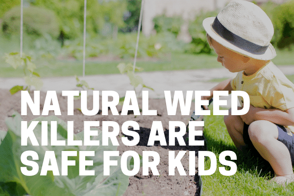 killing weeds with environmentally safe weed killer