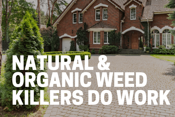 natural weed killer application for driveways