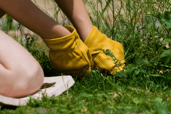 pull weeds by hand