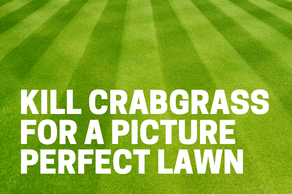 best crabgrass killer and preventer used by gardener on lawn