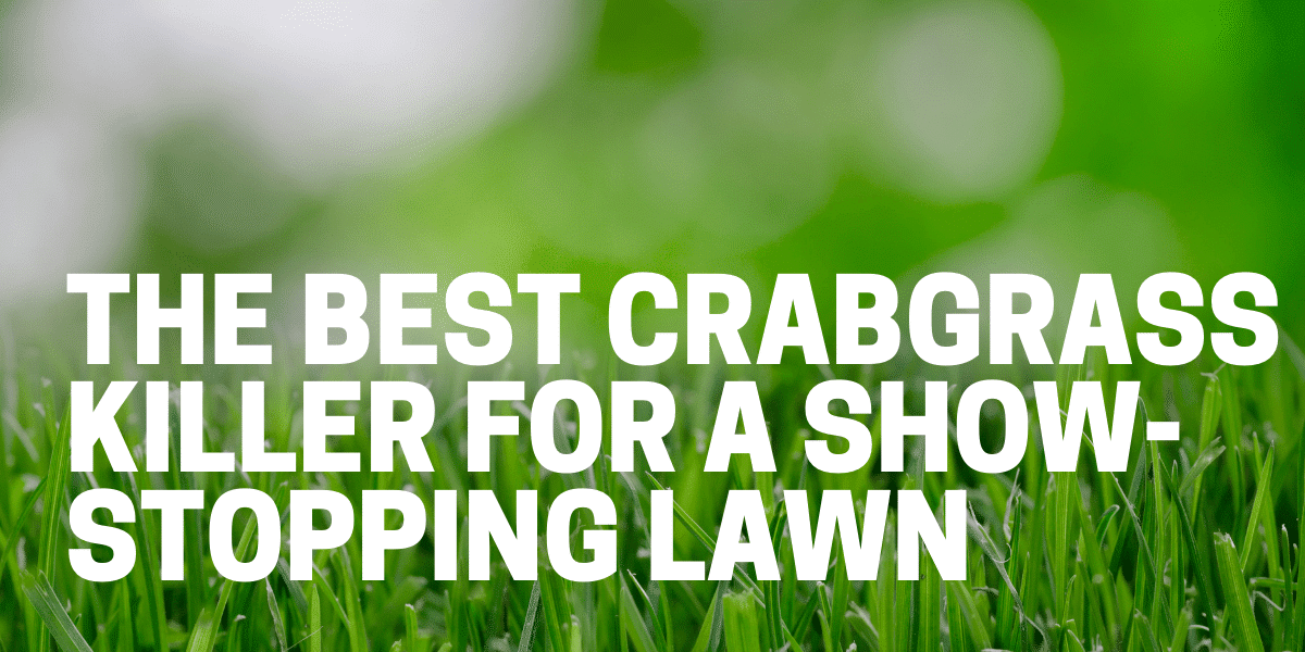 best crabgrass killer and weed preventer used on lawn and landscape