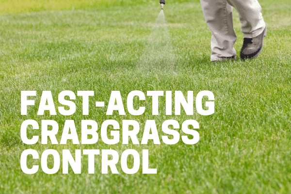 homeowner killing crabgrass in lawn