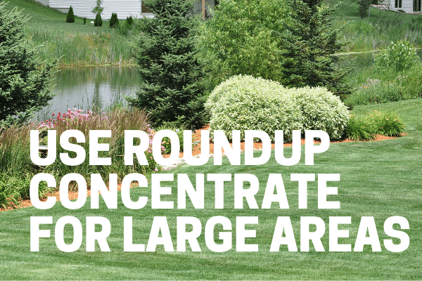 roundup concentrate for lawns used in a large area