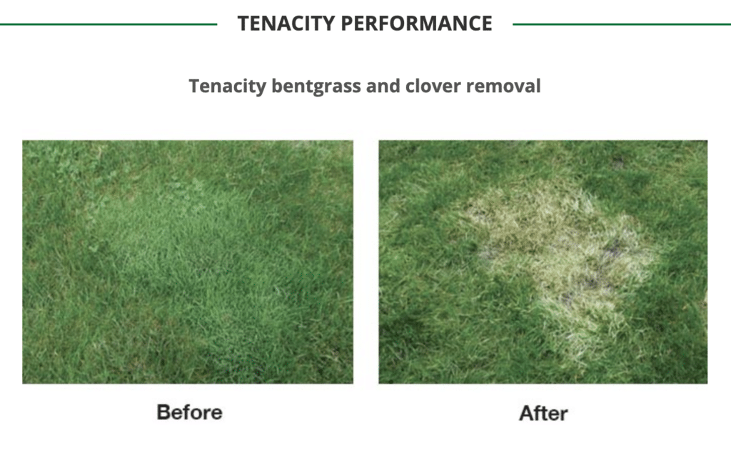 tenacity clover removal before and after