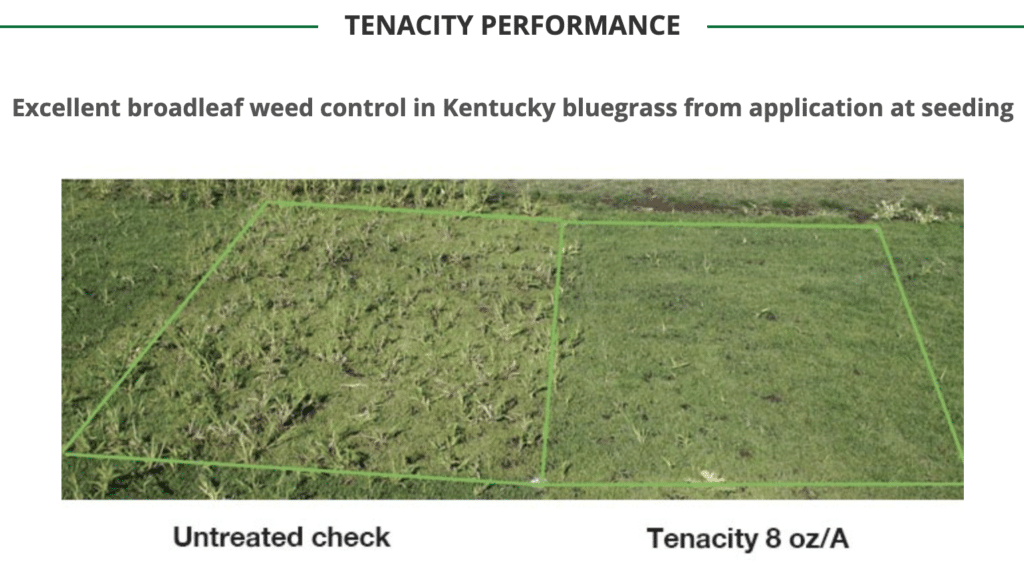 tenacity kentucky blue grass removal before and after