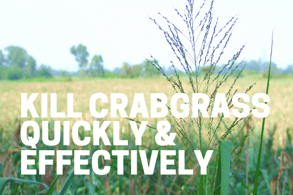 weed killer concentrate used on crabgrass