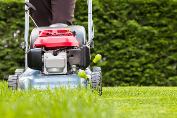 mow lawn at highest level