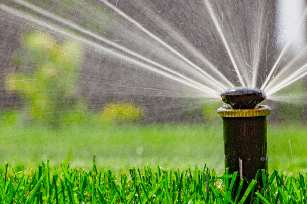 water your yard